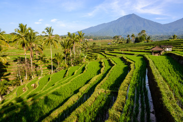 Rice terraces of Jatiluwih at sunrise, Bali