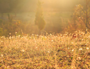 Sun light on meadow flowers in the morning