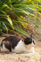 Black and white cat on nature background