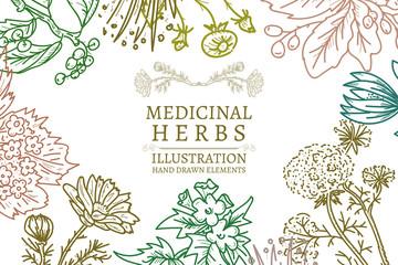 Hand drawn herbs medicinal herbs sketch vintage