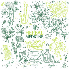 Alternative medicine herbs doodle hand drawn elements sketch