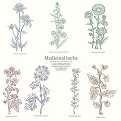 Medical herbs collection of medicinal plants