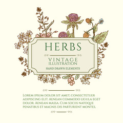 Vintage frame flowers and medicinal herbs