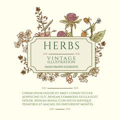 Vintage frame flowers and medicinal herbs