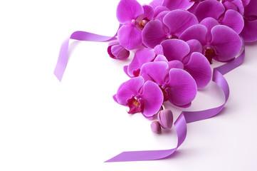 白バックのピンク色の胡蝶蘭とリボン