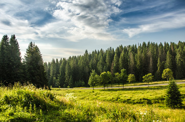 mountain summer landscape. trees near meadow and forest on hills
