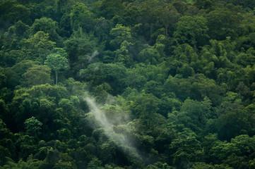 Rain Forest of Friends,Thailand..