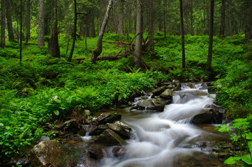 Mountain river in forest.