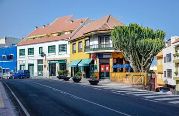 houses and giant cactus tree (euphorbia canariensis) in Punta Brava Puerto de la Cruz, Tenerife, Spain
