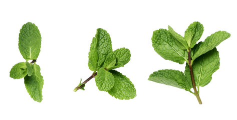 mint twigs on a white surface