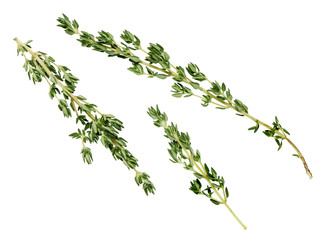 lemon thyme leaves on a white background