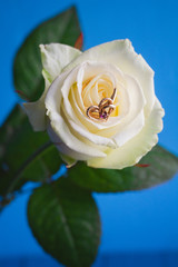 White rose wedding and engagement ring