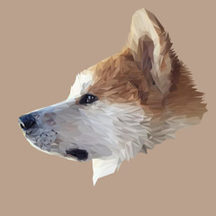 Akita Inu dog animal low poly design. Triangle vector illustration.