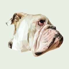 English bulldog dog animal low poly design. Triangle vector illustration.
