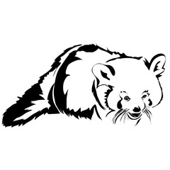 Realistic outline red panda vector illustration. Can be use for