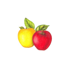 Pencil drawing illustration of red and yellow apples