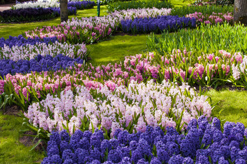 Colorful spring flowers. spring landscape park. Blooming flowers