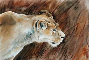 lioness in savanna watercolor illustration