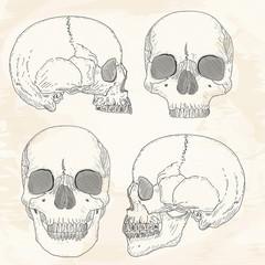 Human skull hand drawn vintage sketch