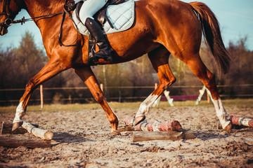 Girl riding a horse Fototapete