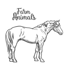 horse, vector illustration sketch of a hand-drawn with a single animal, the only white brown horse, pet and animal farm young stallion, a horse farm, isolated