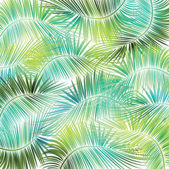 Palm tree branches on white background.
