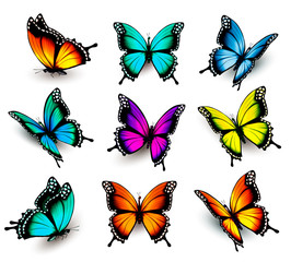 Fototapete - Collection of colorful butterflies, flying in different directio