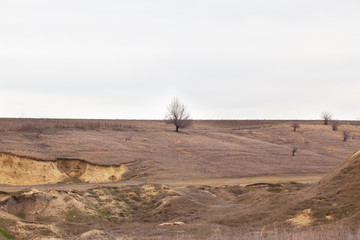 Lonely tree on a hill.
