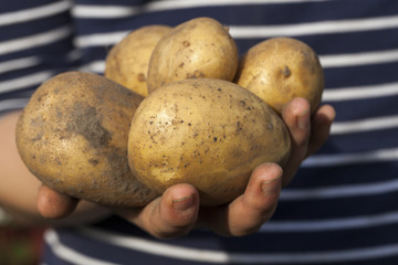 Potatoes in hand