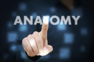 Businessman touching Anatomy