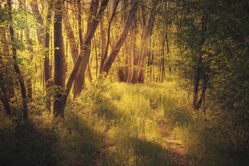 Summer forest detail