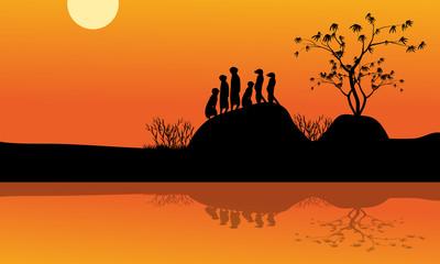 Meerkat in lake of silhouette