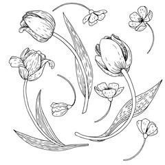 vector set of tulips