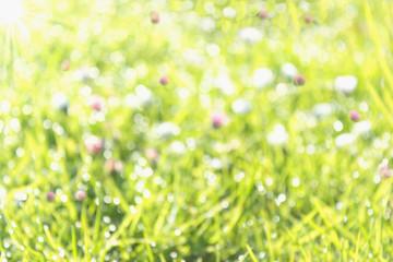Wiese mit Blumen im Sonnenlicht