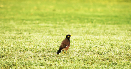 A bird standing on a grassy field
