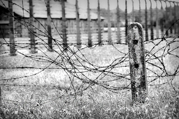 Old worn barbed wire fence on a field outside Auschwitz, black and white.