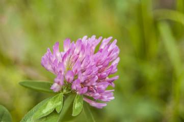 Wallpaper Central violet Flowers