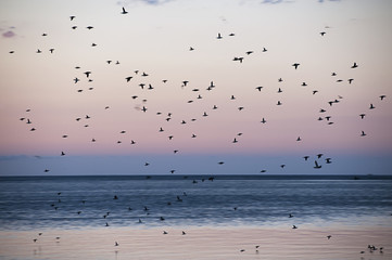 Birds above sea at dusk