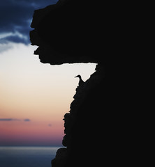 Silhouette of bird perching on cliff