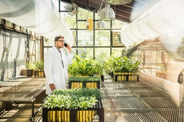 Scientist talking on smartphone at plant growth research facility greenhouse