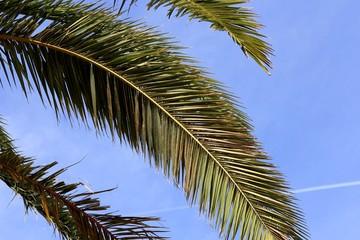 Sommer, Sonne, Sonnenschein - Palmenblätter.