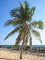 Single palm tree on a beach with blue sky