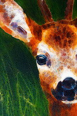 painting deer on canvas, and grass background and glass effect.