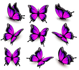 Fototapete - Beautiful of pink butterfly in different positions. Vector.