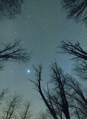 Trees against starry sky