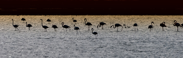 Silhouettes of flamingo in desert pond