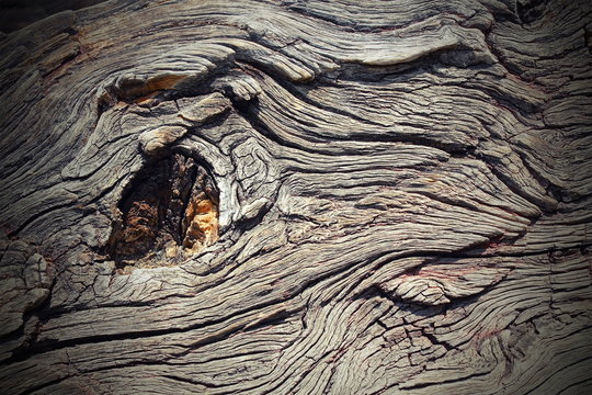 knot on real oak wood