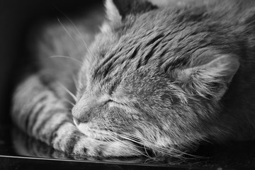 Close Up Of Peaceful Cat Curled Up Sleeping In His Bed