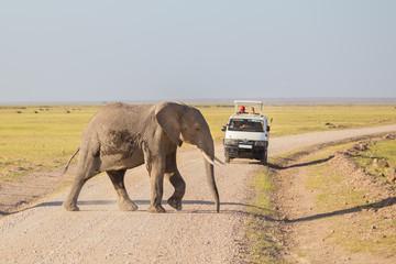 Tourists in safari jeeps watching and taking photos of big wild elephant crossing dirt roadi in Amboseli national park, Kenya.  Wall mural