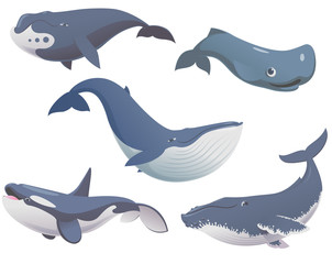 Big set of cartoon cute and funny whales, sea animals set, sea creatures collection, cartoon animals set, vector illustration of blue whale, killer whale, sperm whale, bowhead whale and humpback whale